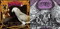 Hatebeak / Caninus - Bird Seeds of Vengeance / Wolfpig [7 inch] (Cover Artwork)