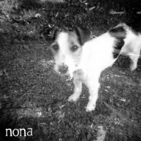 NONA / Crow Bait - Split [7-inch] (Cover Artwork)